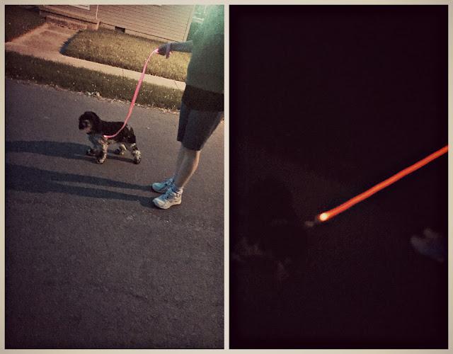 doggy-dom-safe-d-lite--dog-lead