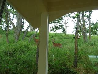 Deer behind our Sequim house