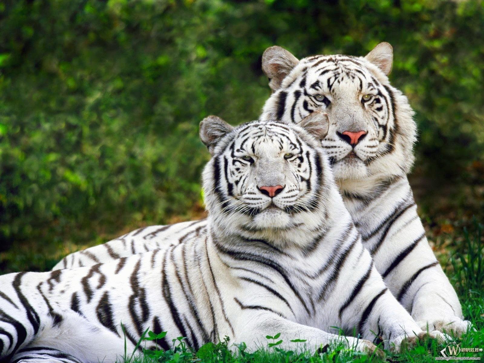 15 animales en peligro de extinción El Mundo de Skizzo