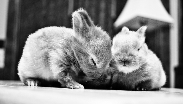 pictures of cute bunnies