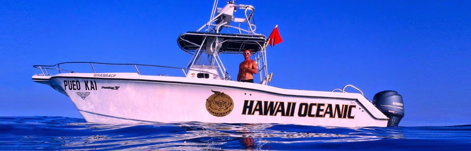 Swim with Dolphins, Snorkel with Manta Rays, Whale Watching, Boat Tours Kona Hawaii