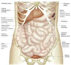 Organele si Sistemele corpului 1