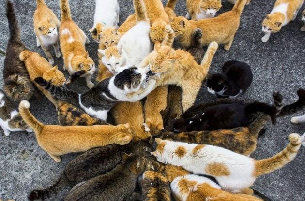 Refeição das gatas