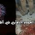 عمليات تموهية من الارهابين باستعمال ألعاب نارية قبل استهداف أعوان الأمن