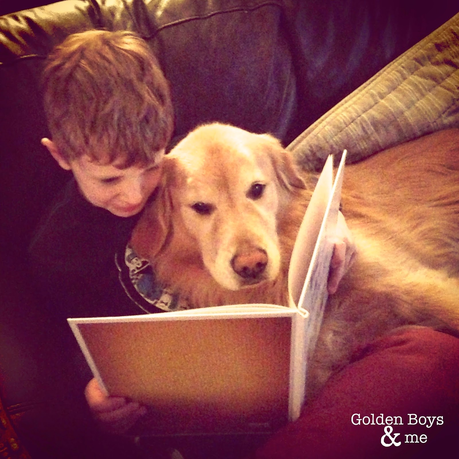 Golden Retriever and boy reading-www.goldenboysandme.com