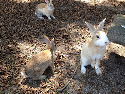 (Japan) – Let's travel to Rabbit Island Ōkunoshima in the Inland Sea