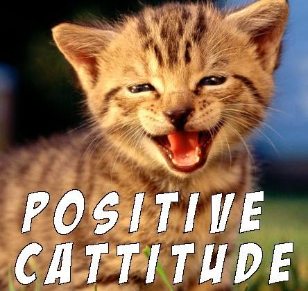 happy cat memes - photo #28