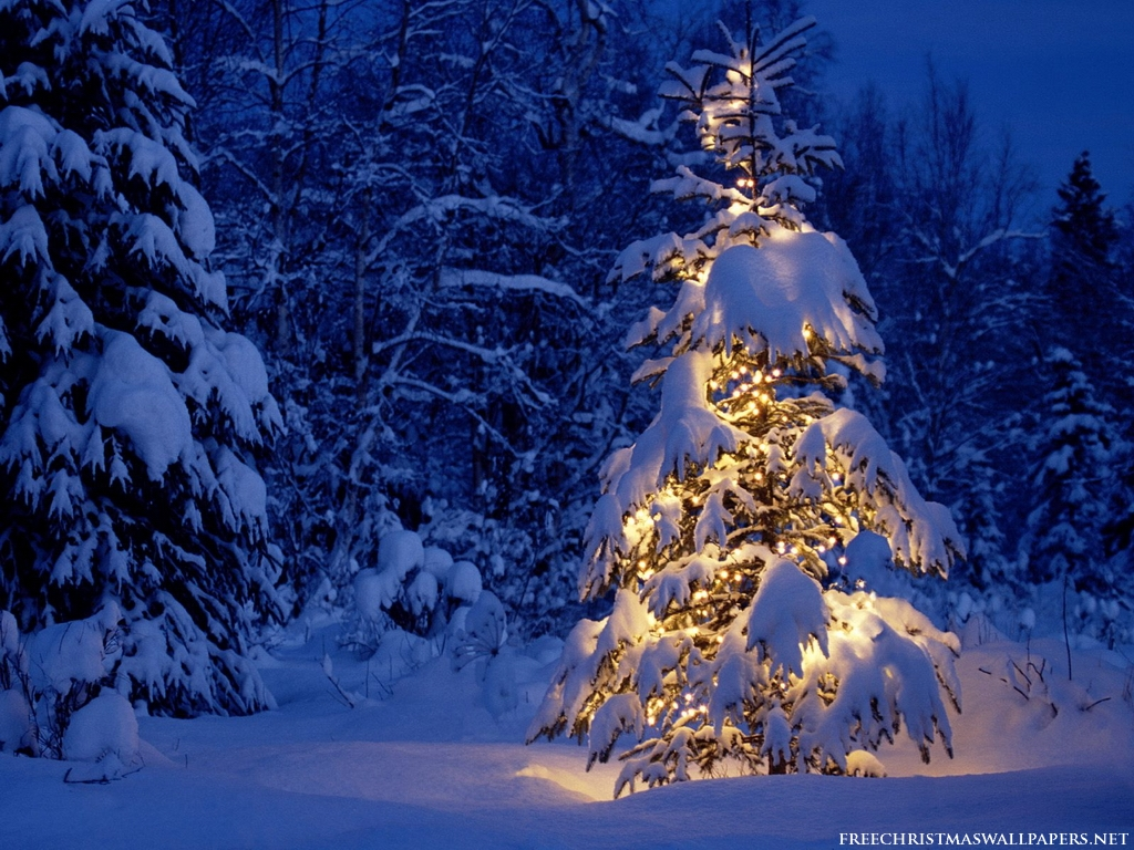 public christmas trees wallpapers hd wallpaper pic