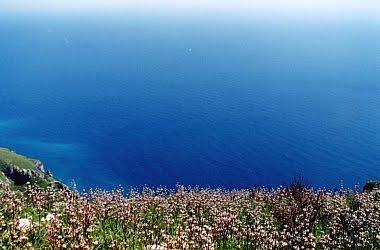 Meditflora: Portale dei fiori & piante in Costiera