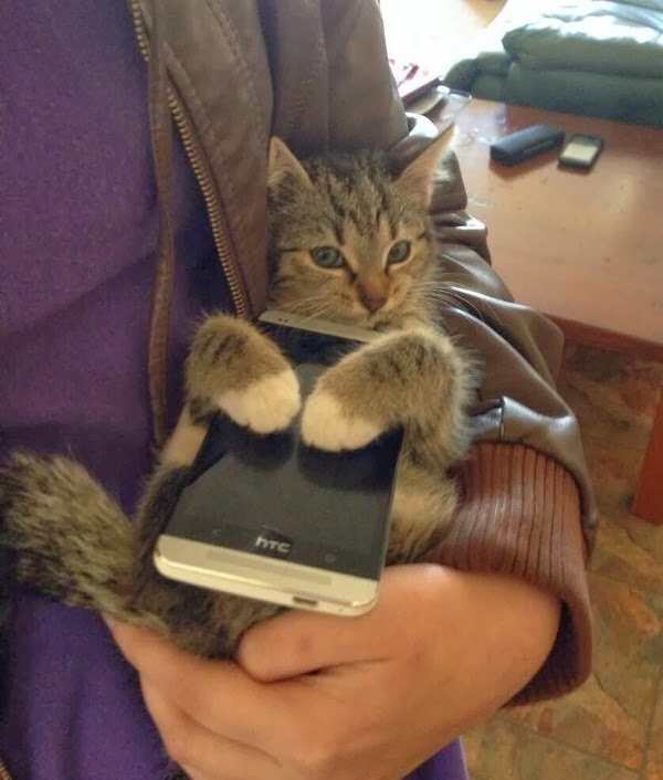 Funny cats - part 83 (40 pics + 10 gifs), cat pics, cat hugs a phone