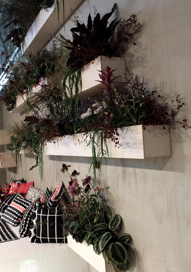 vihekasvit laatikoissa