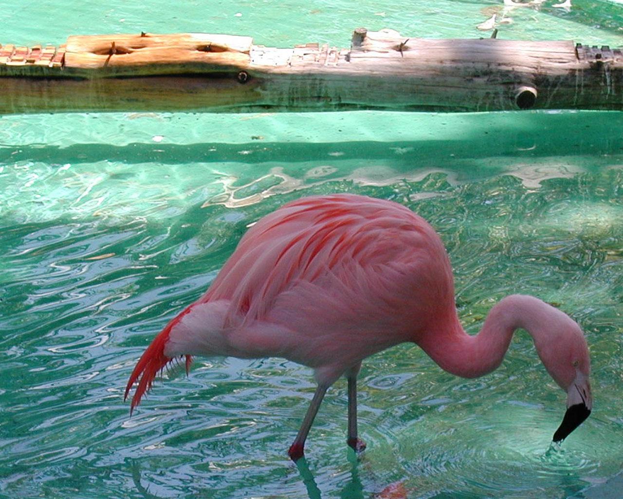 http://4.bp.blogspot.com/-0ePsNOPkUk4/UAB0Z-Os-VI/AAAAAAAABHY/PQE4Buq8aoc/s1600/10350-4-flamingos_-_5.jpg