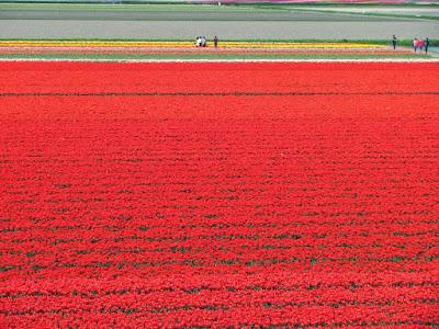 More Flowers Netherlands