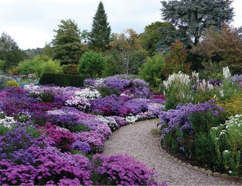 Giardinaggio laura ponte in valtellina aster - Settembrini fiori ...