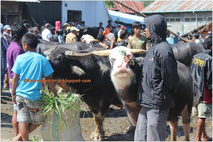 Destination Nowhere  - Pasar Bolu Rantepao Toraja, Bukan Pasar Biasa