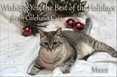 Merry Christmas, Colehaus Cats