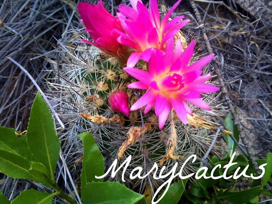 Marycactus