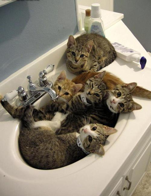 Fotos muy graciosas y divertidas de gatos