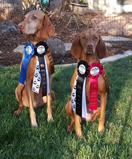 Both girls get their RATN titles (Barn Hunt), with 1st and 2nd place. They had a blast! Nov 2015