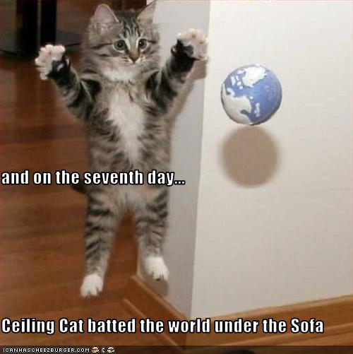 cats captions funny pictures images and photos cat funny pic cat funny ...