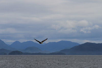 Eagle in Flight and Layers of Princess Royal Island