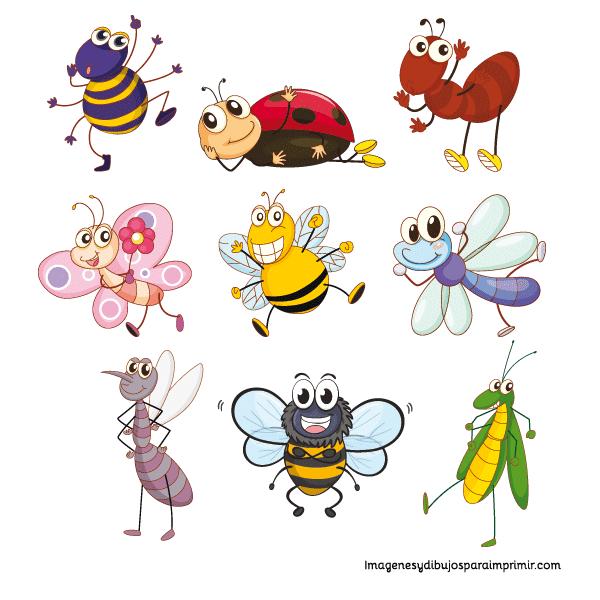 saltamontes, araña, abeja