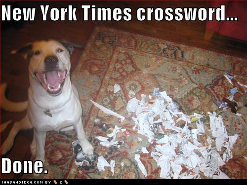 funny-dog-pictures-new-york-times-crossword-done funny pictures - funny-funny pictures of people