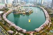 เทศกาลซากุระที่ทะเลสาบซอกชน