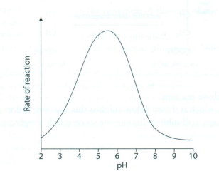 the effect of ph on the rate of an enzyme controlled reaction Investigate the effect of ph on the rate of enzyme-controlled reactions thus as the rate of reaction values are mean values the curve will be a line of best fit.