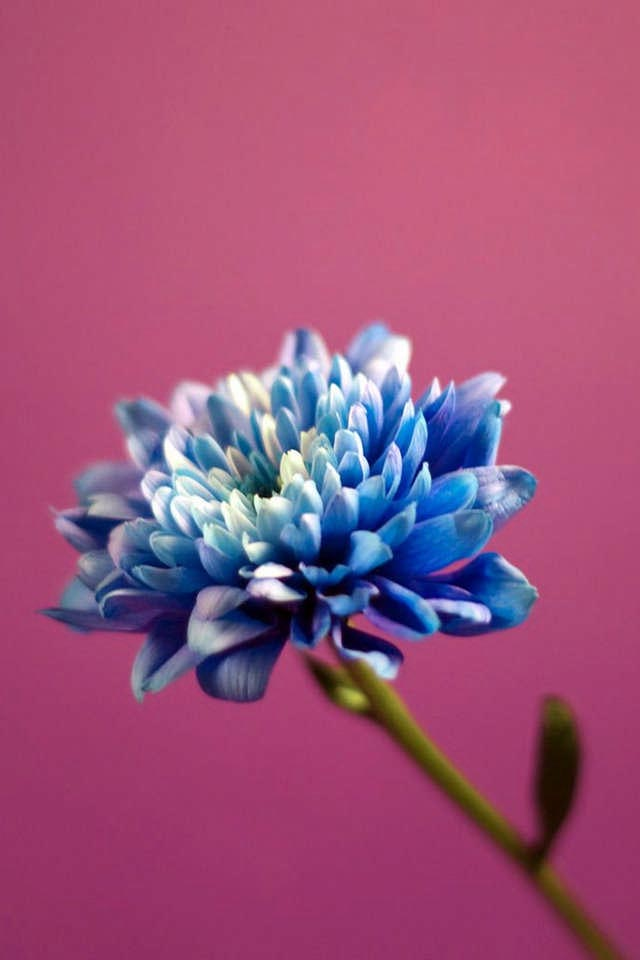 high quality flower iphone wallpaper wallpapers