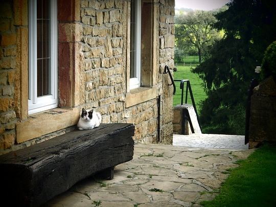 chat ardennes
