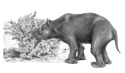 En Australie, c'est l'Homme qui a fait disparaître la mégafaune M%C3%A9gafaune_australie