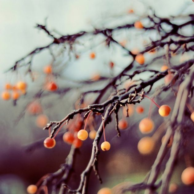 Pretty blurry orange berry tree