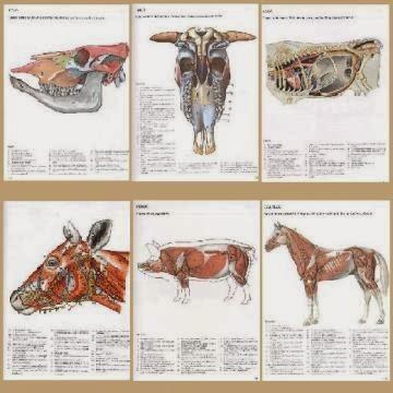 Definicion de Anatomia y ramas en que se divide » Conoce tu mascota