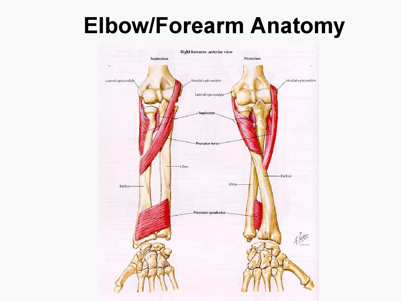 dentalaka: Blood Supply, Venous drainage, surface anatomy and Nerve ...