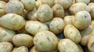 Budidaya kentang di dataran tinggi