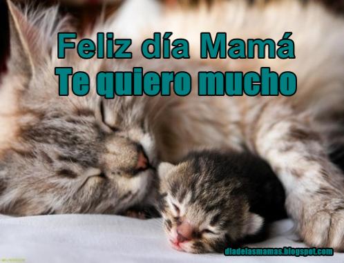 gatito con su mama
