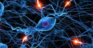 Nel cervello scoperti vasi linfatici sconosciuti
