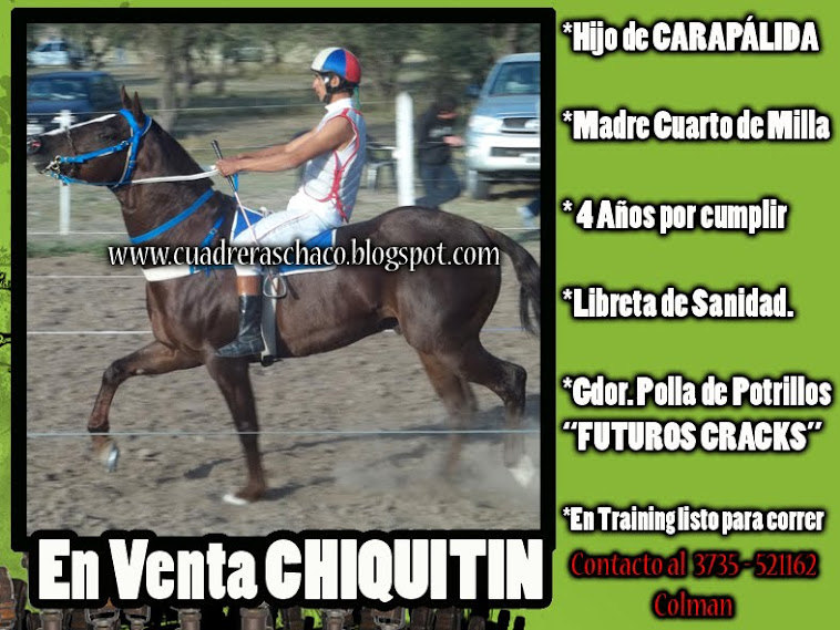 CHIQUTIN EN VENTA