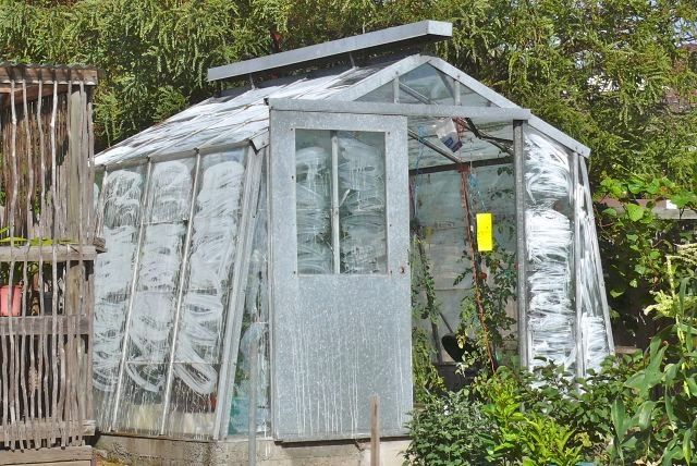 Every Year Max K Sows Tomato Seeds Early July In An Electrically Heated Propagation Tray And Then Puts Them His Hothouse Mid August