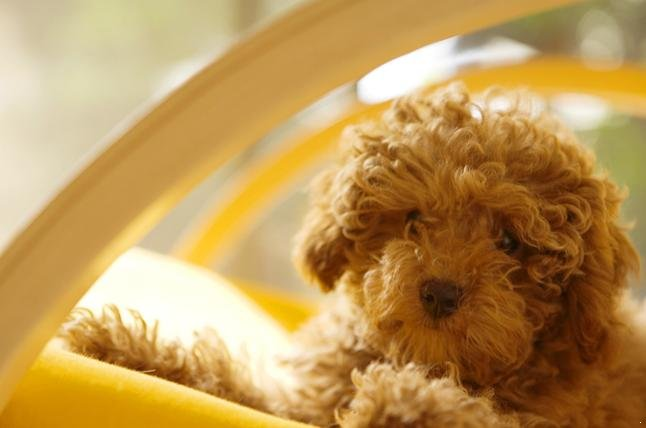 ... dog you will have to decide on a breed of dog and also how the