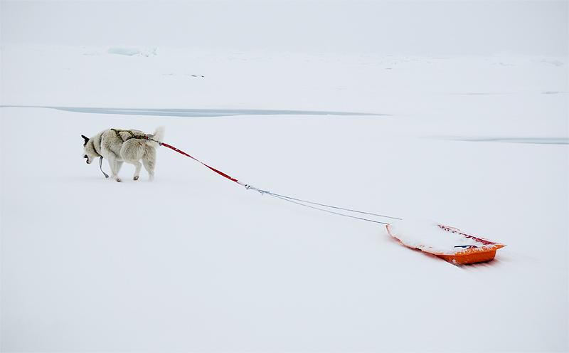 Arctic Ocean, Põhja-Jäämeri, Tara