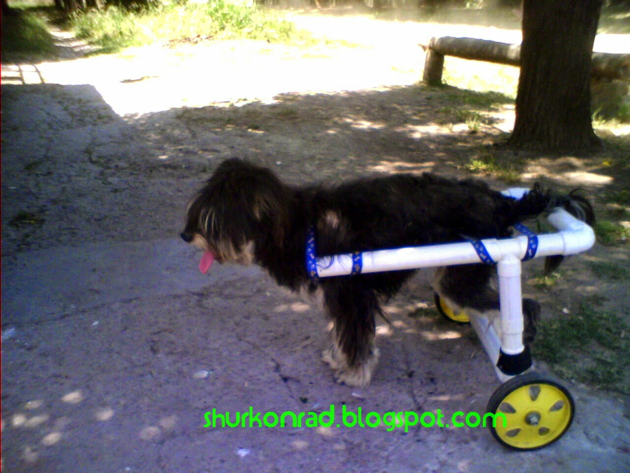 ShurKonrad perro silla ruedas dog 32