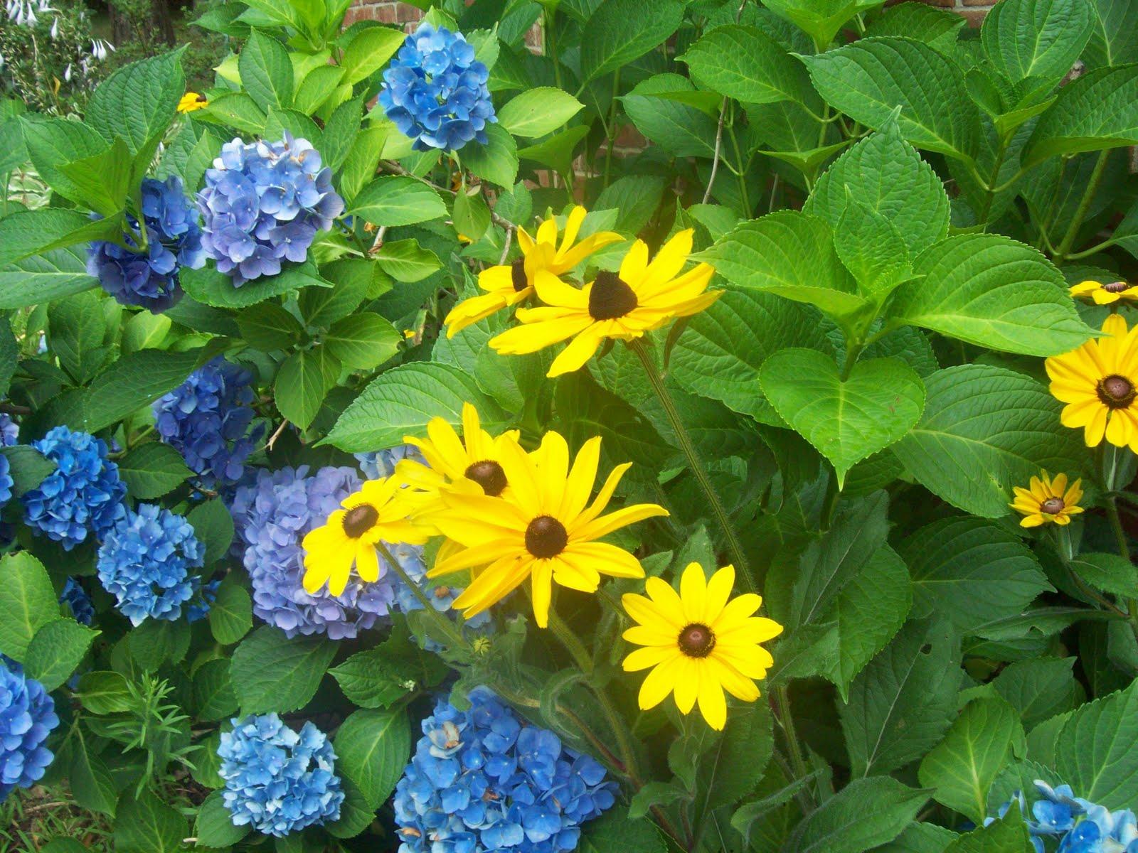 this morning s garden shot