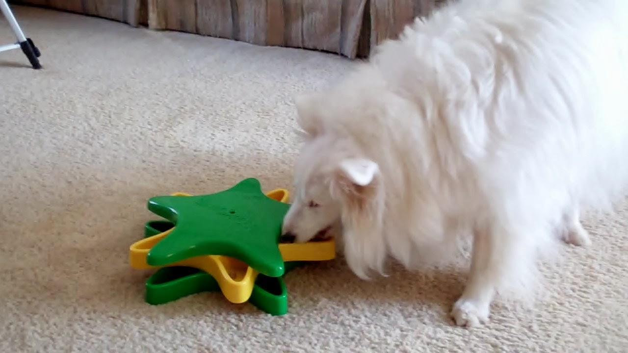White dog blog ways to keep your b d dog or any dog happy when it s too cold to go outside - Keeping outdoor dog happy winter ...