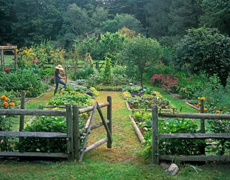 The Garden. There I Am, Tending The Veggies. Wait, Where Are The Chickens?
