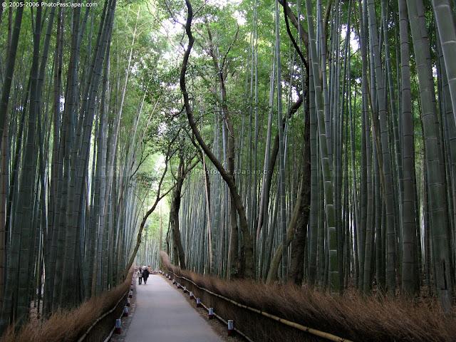 Bamboo Grove3