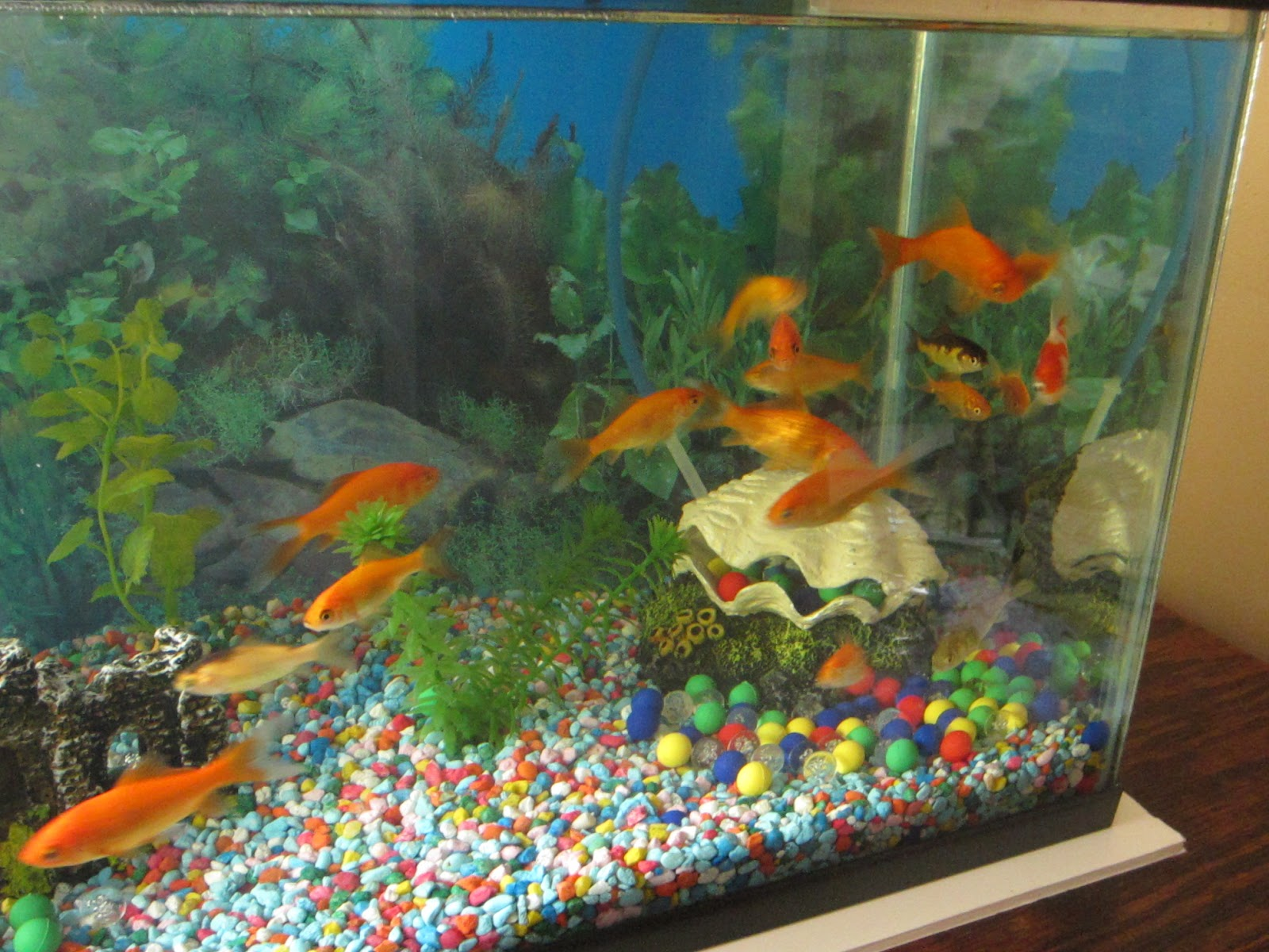 Fish tank home made decorations home design and decor for New fish tank