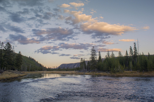 Madison River in Yellowstone National Park
