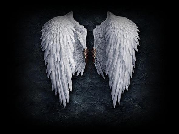 Alas angeles - Imagui
